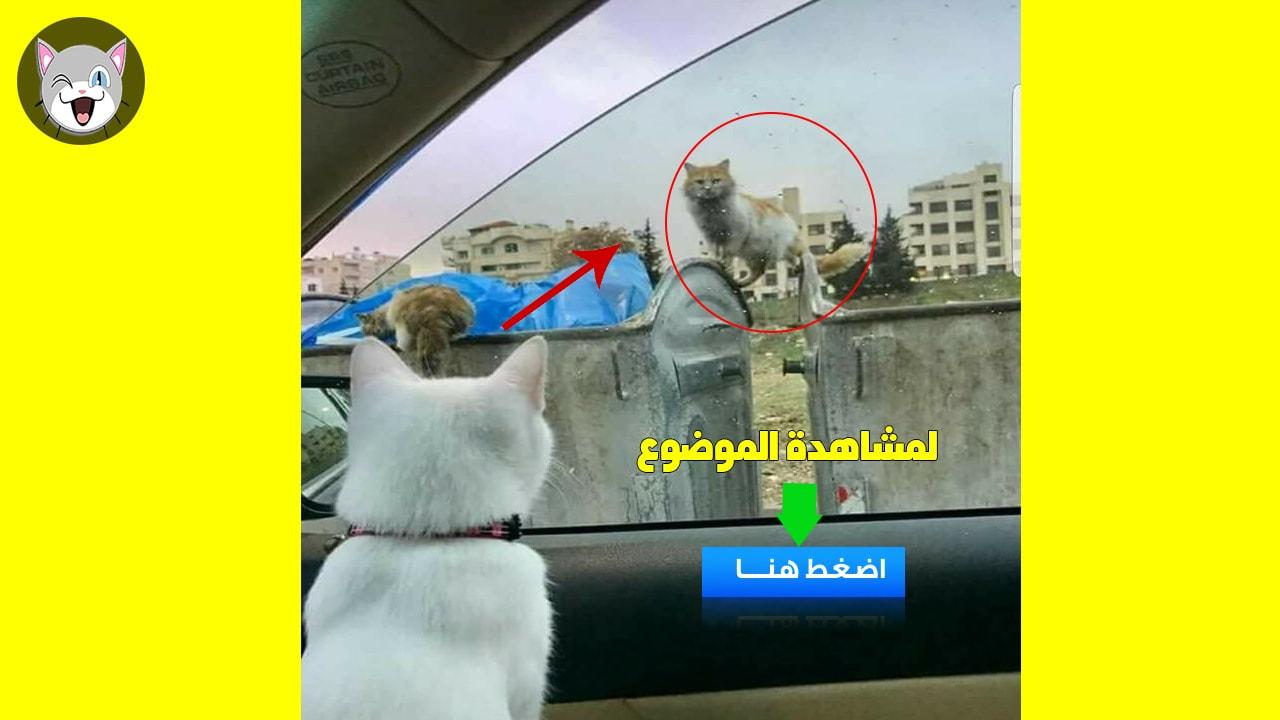 قصة الصورة التي أشعلت مواقع التواصل الإجتماعي القطة بيبوس وصديقها على التلفزيون
