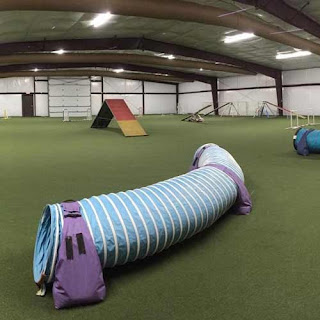 Greatmats GrassTex True Turf Indoor Dog Agility Turf