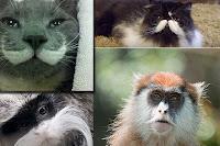 صور حيوانات اليفة 2019 خلفيات حيوانات جميلة