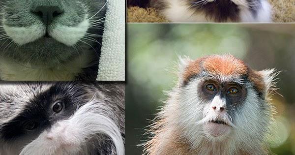 صور حيوانات اليفة 2019 خلفيات حيوانات جميلة مصراوى الشامل