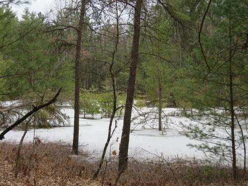 frozen pond in woods