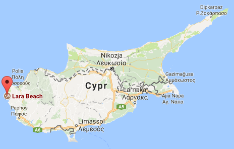 cypr, żółwie, plaża lara, najlepsze miejsca na cyprze
