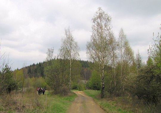 Z brzozowej polanki odbijamy na chwilę nieco na lewo...