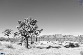 Le Chameau Bleu - Voyage à Joshua Park et ses déserts