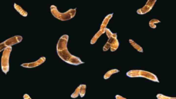 A genética de regeneração