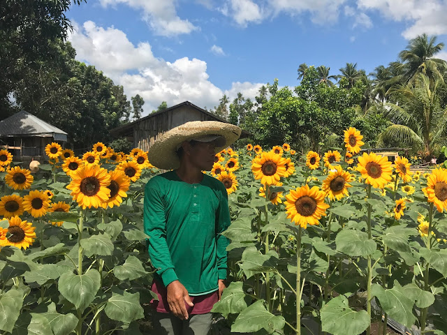 https://www.jonashares.com/2018/02/sunshine-farm-philippines.html