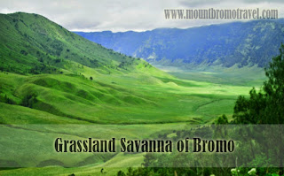 Grassland Savanna of Bromo