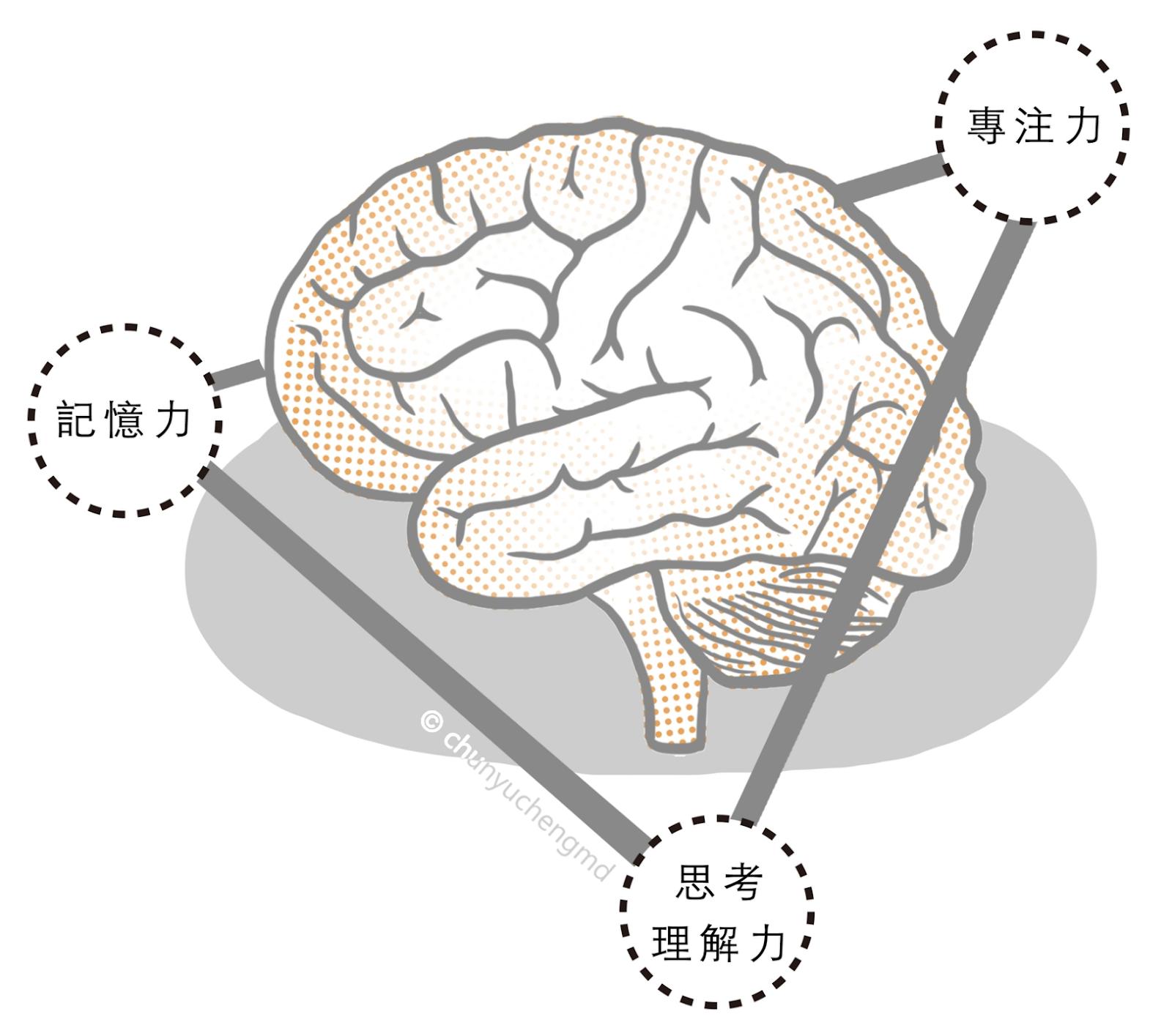 腦霧是大腦三原力的失調現象