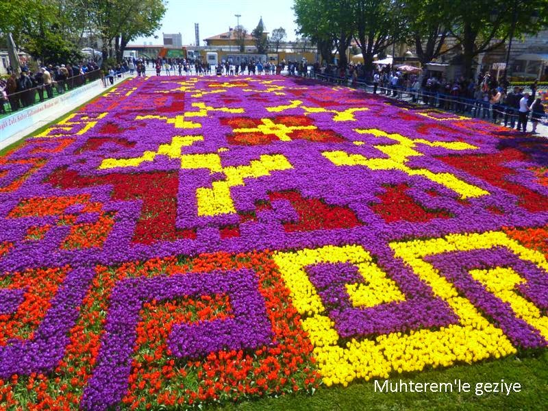 tulips carpet
