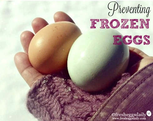 How Do I Keep my Chicken Eggs from Freezing? | Fresh Eggs Daily®