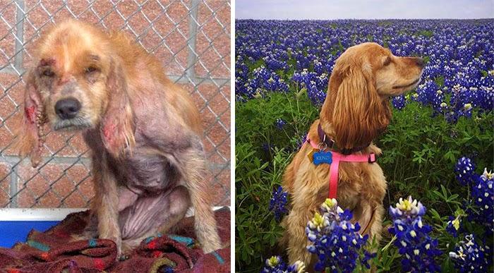 38af8a7472f 16 Πριν και Μετά φωτογραφίες από διασωθέντα σκυλιά - TooCute