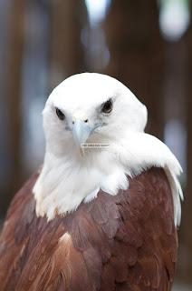 Ark Avilon Zoo - Eagle