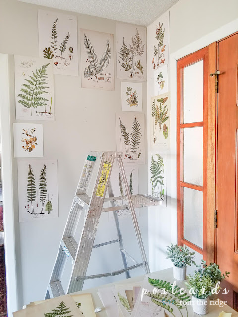 ladder and fern prints on walls