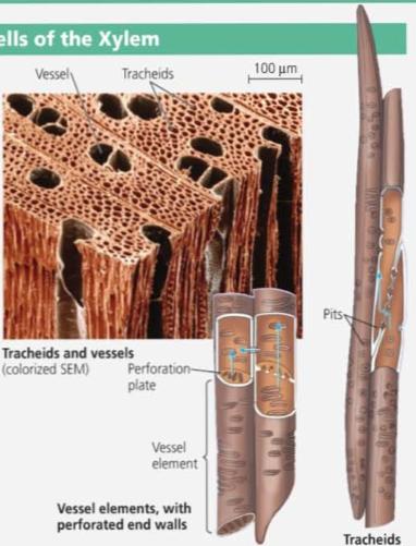 果凍2020藝術文化讀書會 Jelly Reading Club: 維管束組織 Vascular Tissue Is Specialized for the Transport of Materials