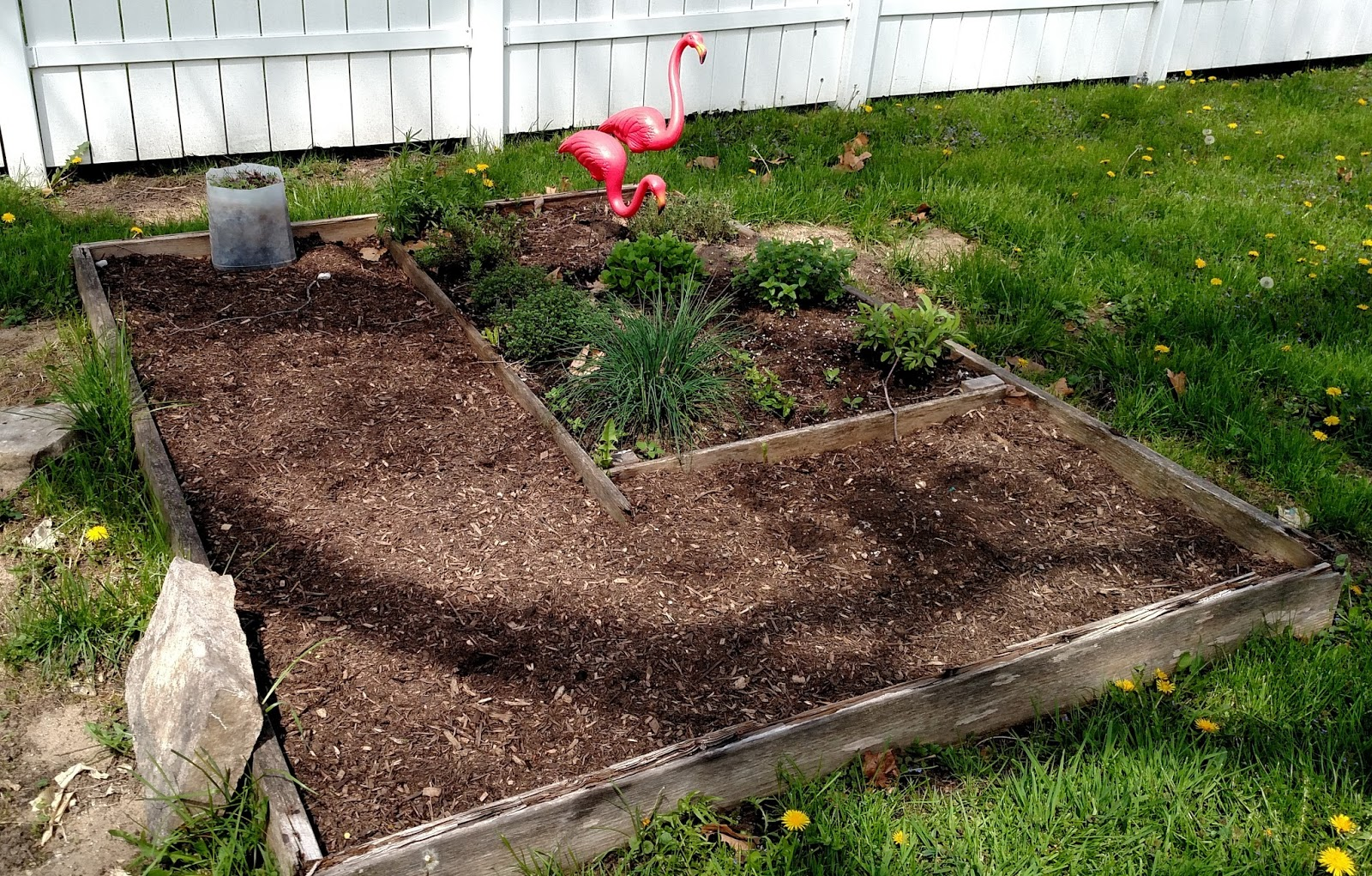 Backyard Patch Herbal Blog: New Garden update - starting from scratch