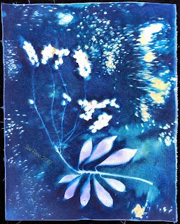 Wet cyanotype_Sue Reno_Image 580