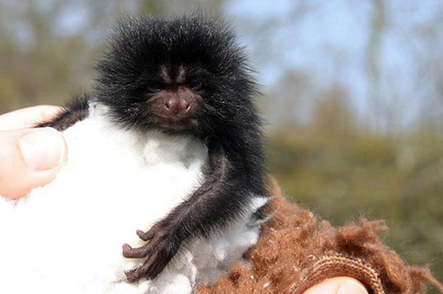 funny cool pictures cute baby animals. Black Bedroom Furniture Sets. Home Design Ideas