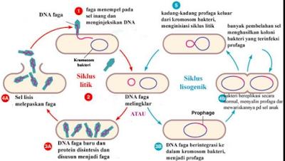 Replika Virus Dan Cara Reproduksi Yang Berbeda Dari Makhluk Hidup Lain