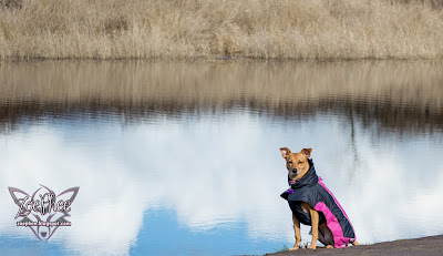 Hurtta, Hurtta Ultimate Warmer Dog Coat
