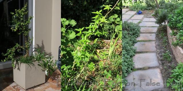 Replanted garden