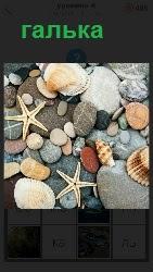 460 слов 4 на берегу лежит галька и морская звезда 6 уровень