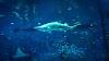 Hoe veilig zwemmen op plaatsen die bekend staan als aanvallen van haaien?