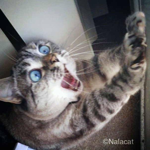 Nala, The Shocked Cat-2