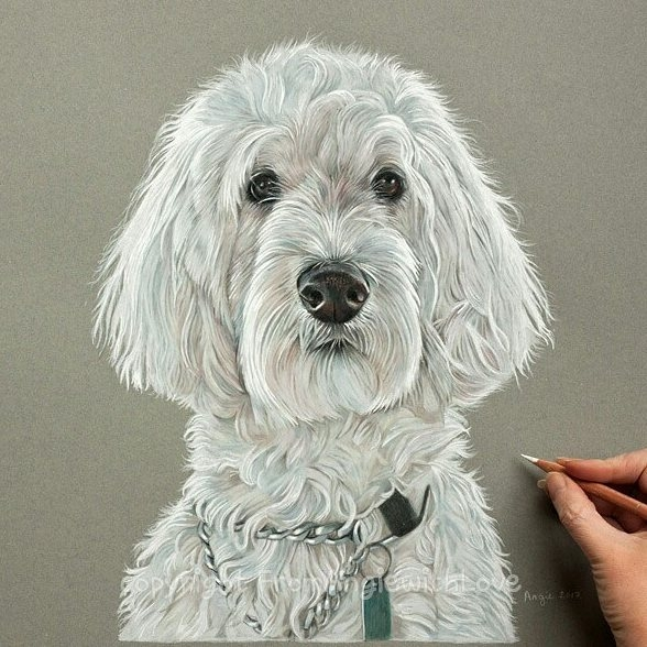 11-Sophie-the-Cockapoo-Angie-A-Pet-and-Wildlife-Pencil-Drawing-Artist-www-designstack-co
