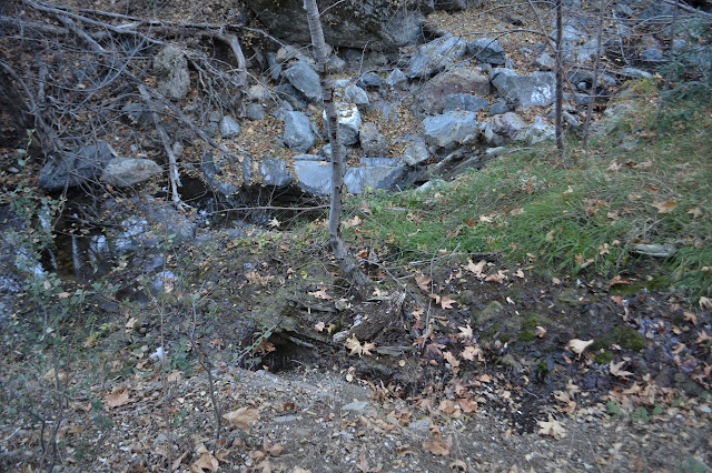 water in a stream bed and water on the trail