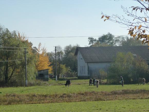 Село Задеревач Стрыйского района, Украина