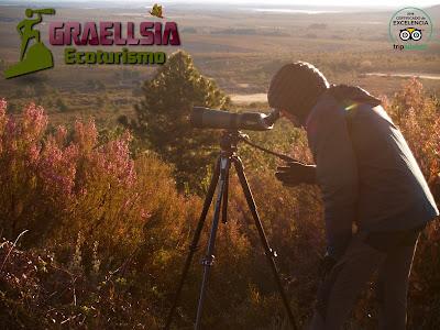 Observación del Lobo Ibérico en la Sierra de La Culebra