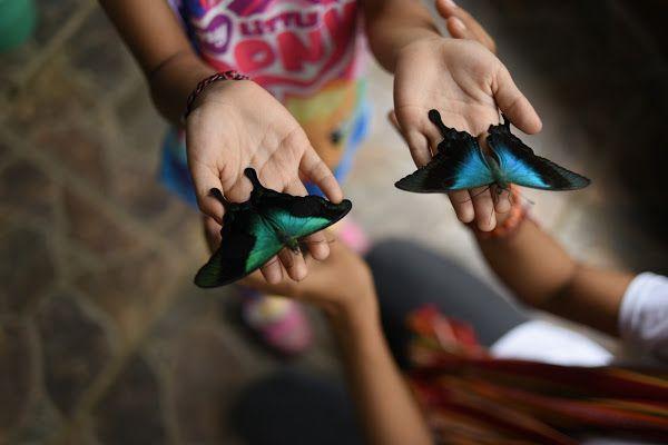 Wisata Hewan di Taman Kupu-kupu Taban Bali