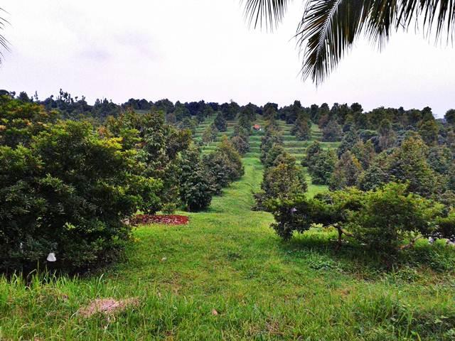 Kebun Buah Plantera Kendal AgroWisata