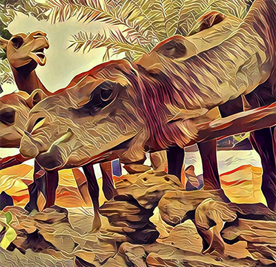 Download Prisma for Android