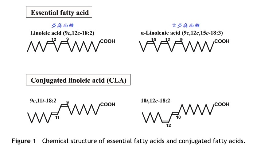 憤世嫉俗的營養人生: 共軛亞麻油酸 (Conjugated Linoleic Acid, CLA)