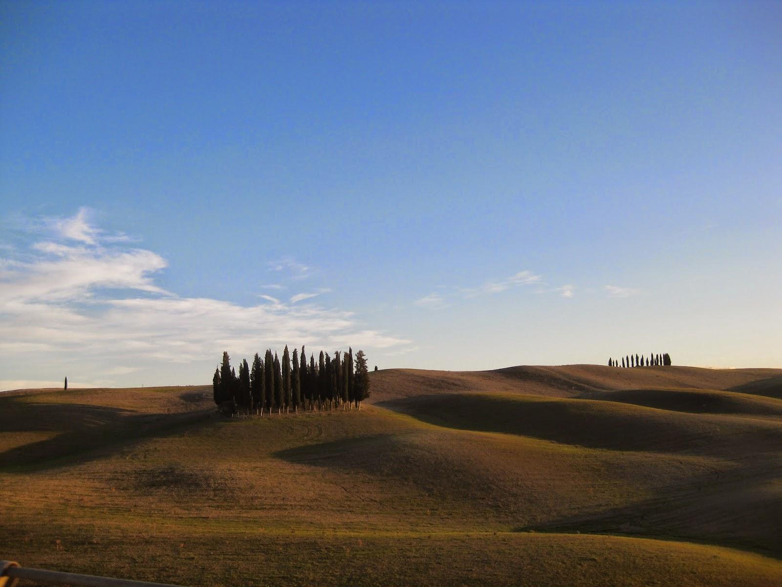 Grupo de cipreses tipicos del paisaje de la Toscana