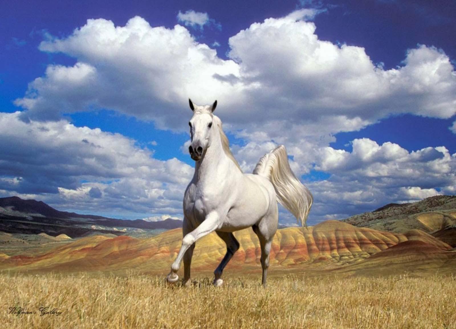 Great   Wallpaper Horse Spring - appaloosa+horse+horse+wallpaper  Picture_808927.jpg
