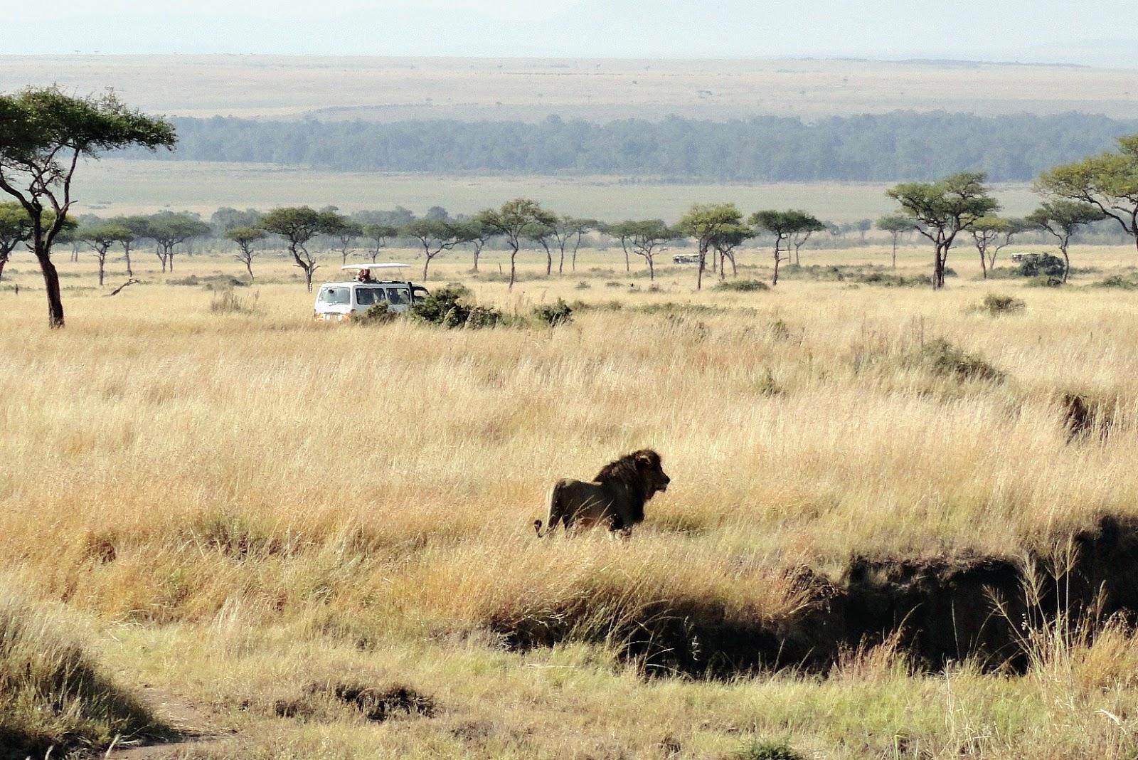 safari jeep in kenya masai mara