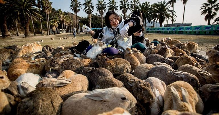 Di Pulau Ini, Jumlah Kelinci Lebih Banyak Dibanding Manusia
