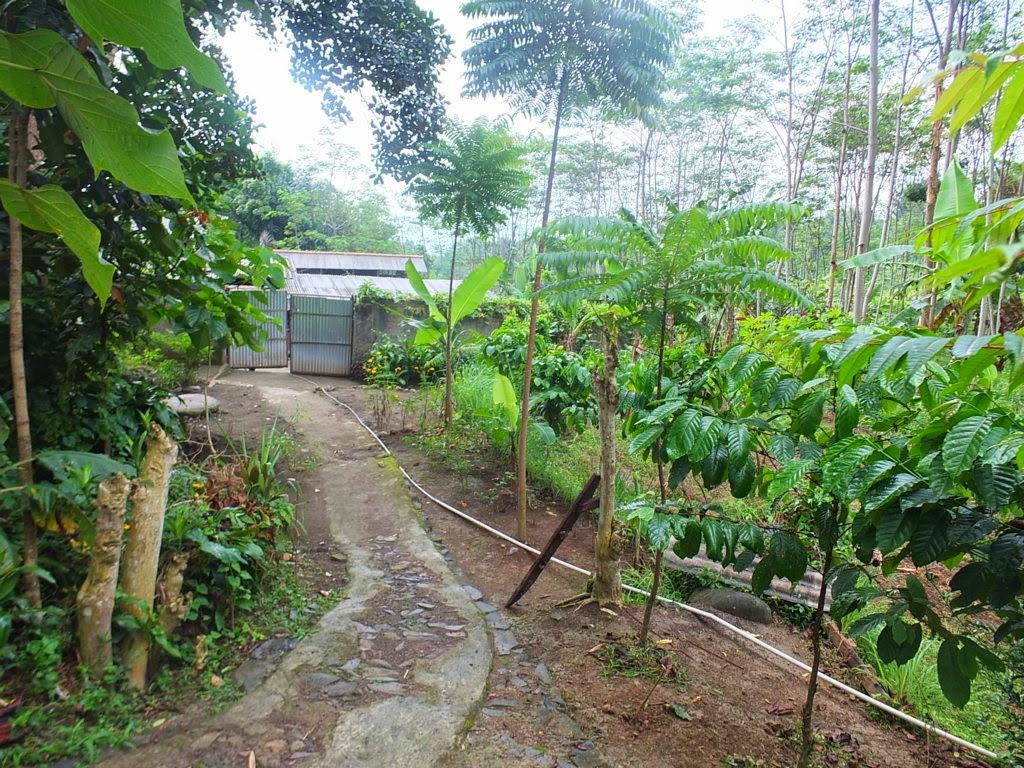 DSCF1809+(FILEminimizer) Jual Tanah Kebun Albasiah 6 HA Di Kec Pacet Jual tanah di cipanas