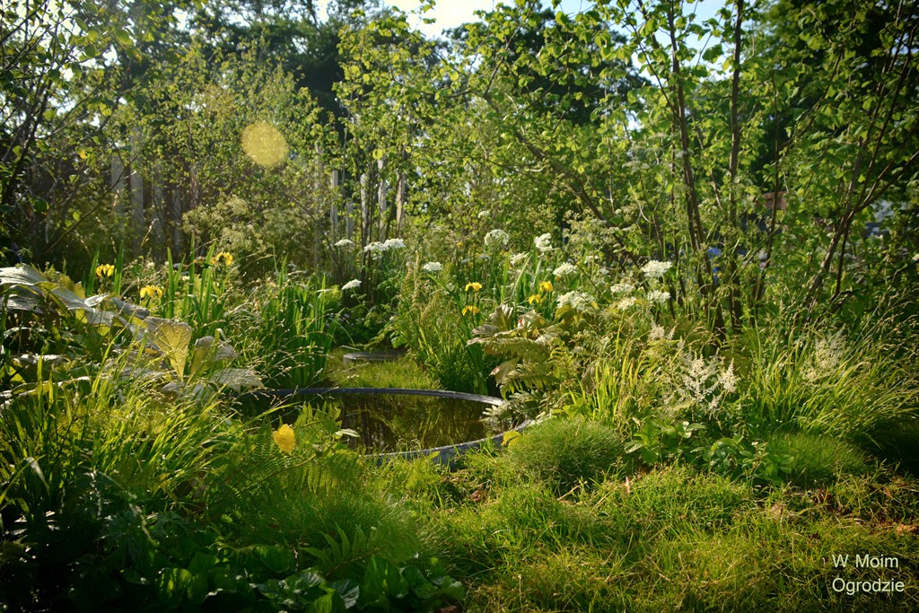 projekt ogrodu leśnego