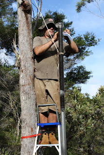 Cameron Barr sampling leaves from the paperbark tree on Fraser Island, Queensland