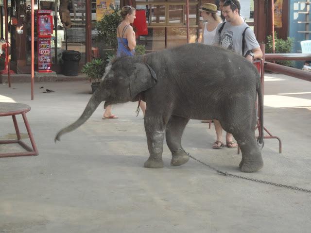 Ayutthaya, Thaïlande, temple, visite, ou dormir, bouddha, offrande, vélo