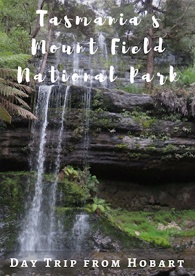 Tasmania's Mount Field National Park and An Encounter with a Wild Platypus on a Day Trip from Hobart #Tasmania #Australia
