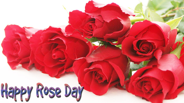 HD-Rose-for-rose-day-wallpaper