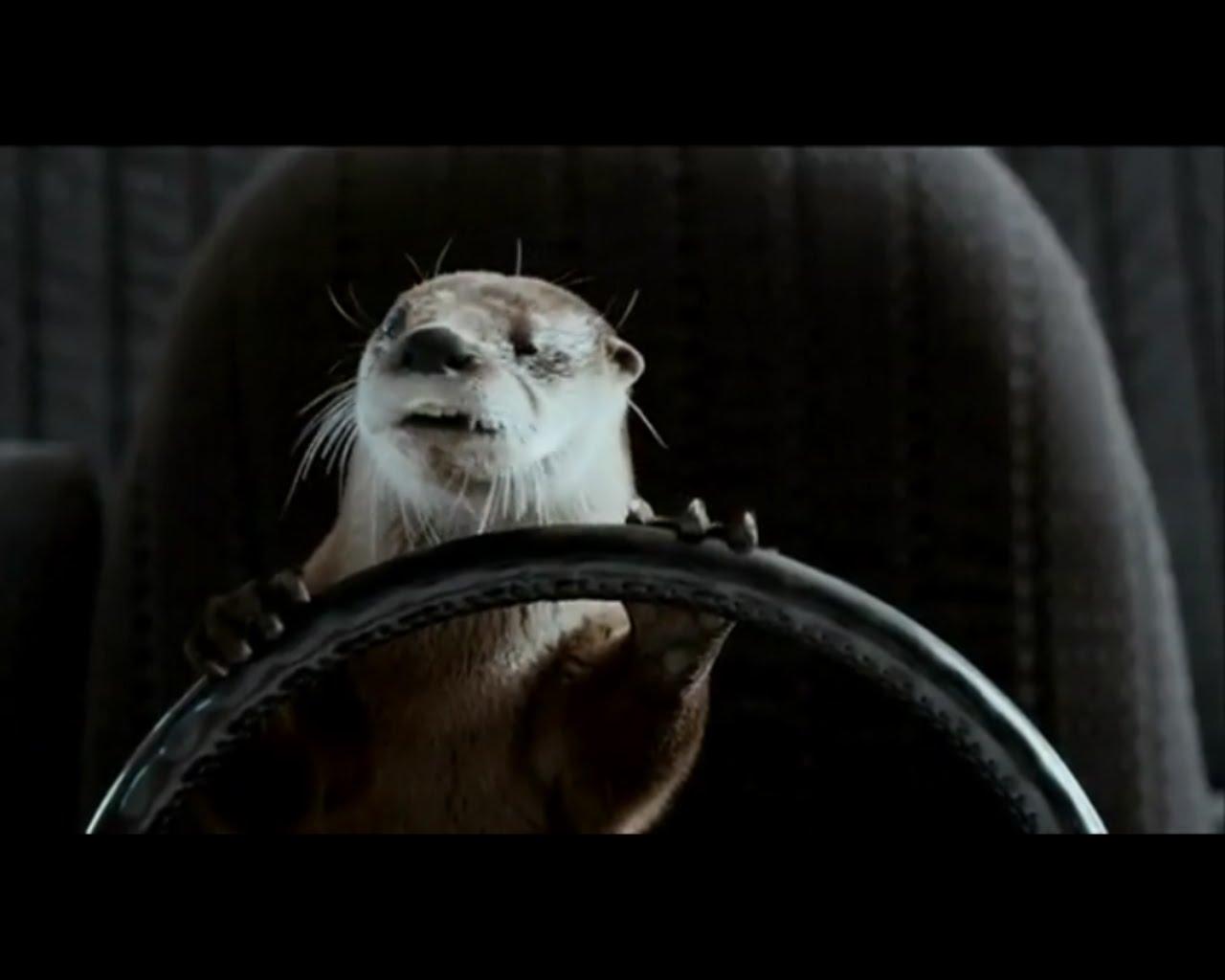 photograph of animals cars