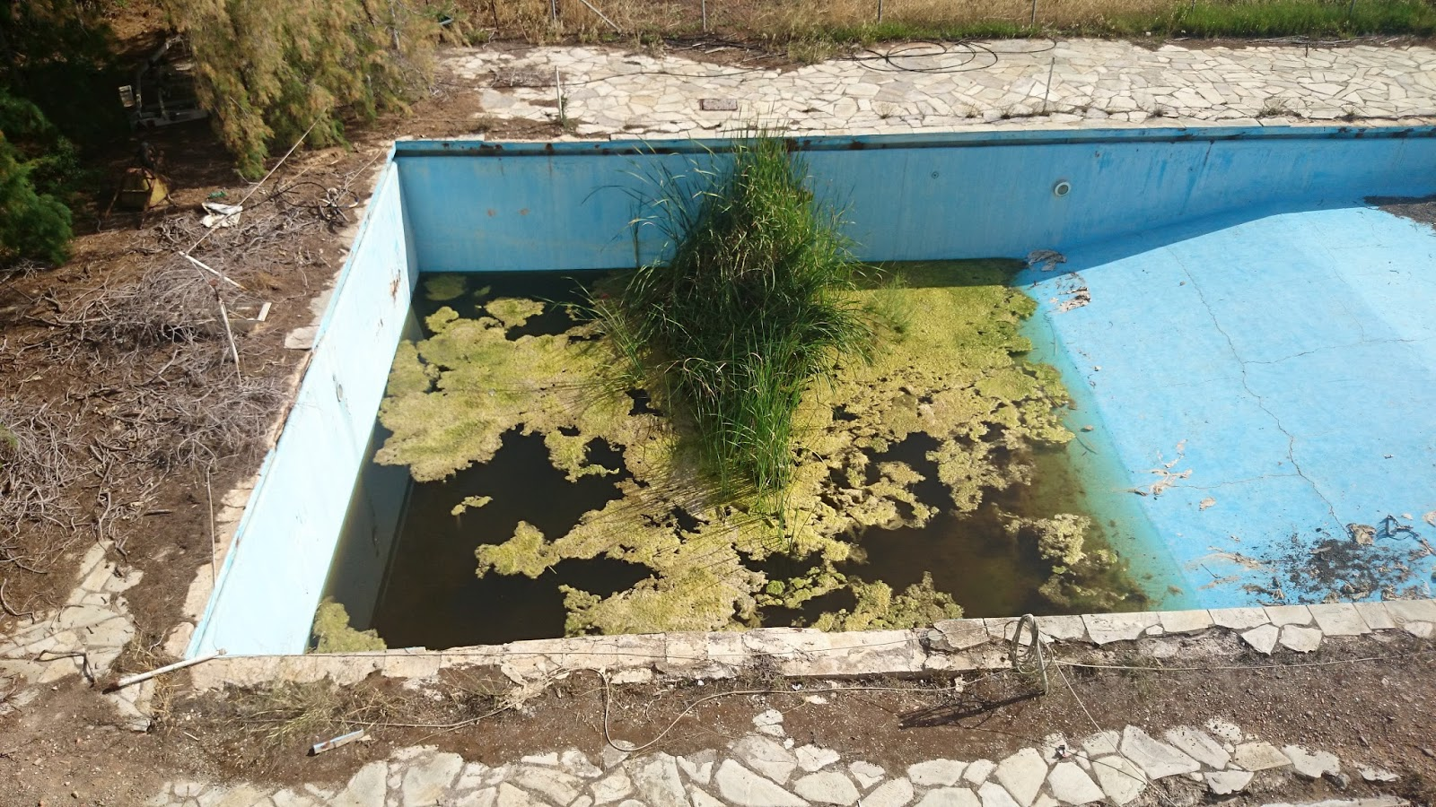 Athens nature journal swimming pool to pond conversion for Swimming pool conversion