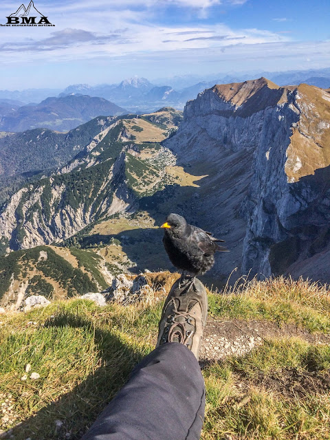 Blick zum wilden Kaiser  - Wanderung im rofan - Gipfel Hochiss