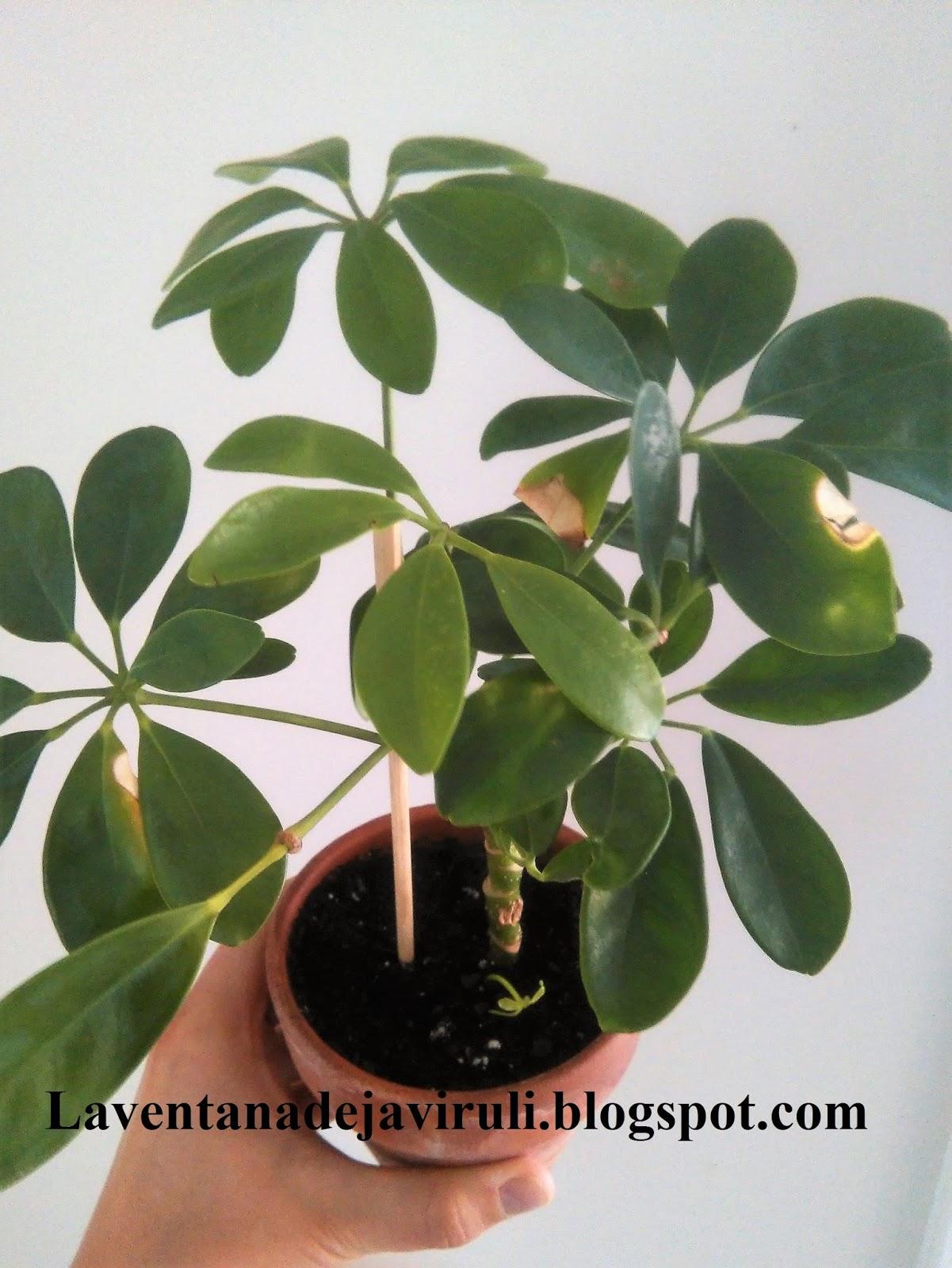 Nombres plantas de interior latest las plantas de - Hogarutil plantas ...