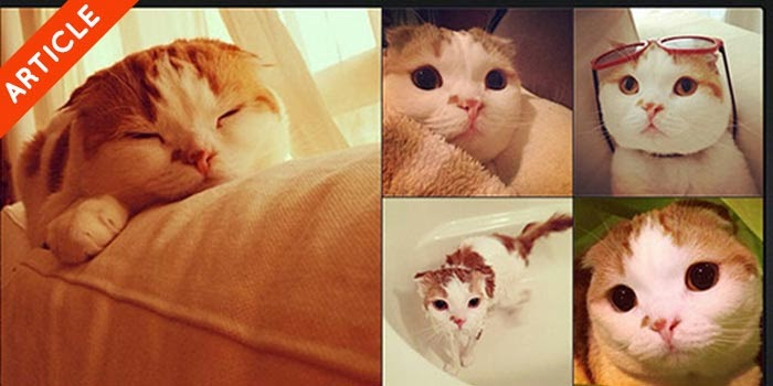 who to follow on instagram cat edition
